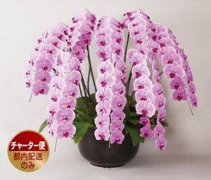 画像1: ピンク大輪胡蝶蘭8本立ギフト(120輪以上) (1)