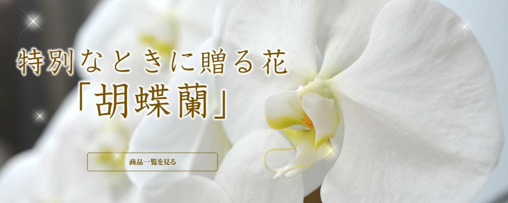 当別なひとときに贈る花 胡蝶蘭